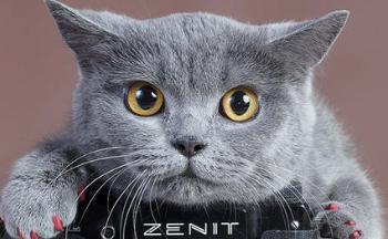 拍猫咪的软件