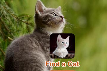 寻找一只猫游戏下载