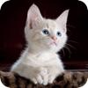 寻找一只猫游戏下载v1.0