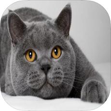 欣欣宠物商城苹果版v1.0