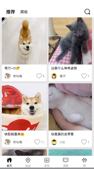 交宠宠物交流平台