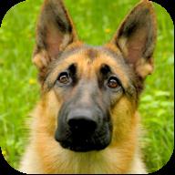 会说话的狗AR安卓版1.0.3 免费版